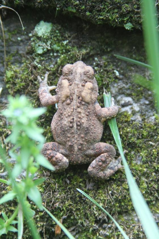 Oscar the Toad