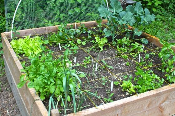 Foot-by-Foot Garden
