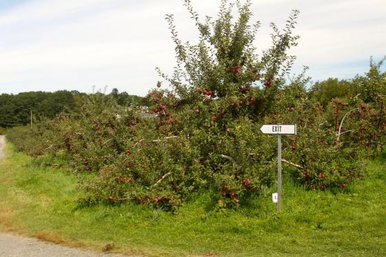 Exiting Appleland