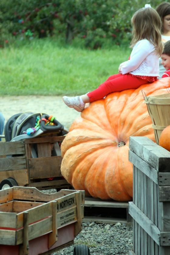 Hello big pumpkin.
